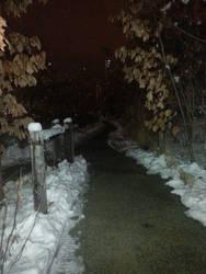 Snowy Nighttime Walk