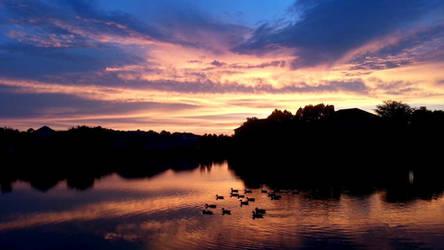 Ducks on the lake at sunset