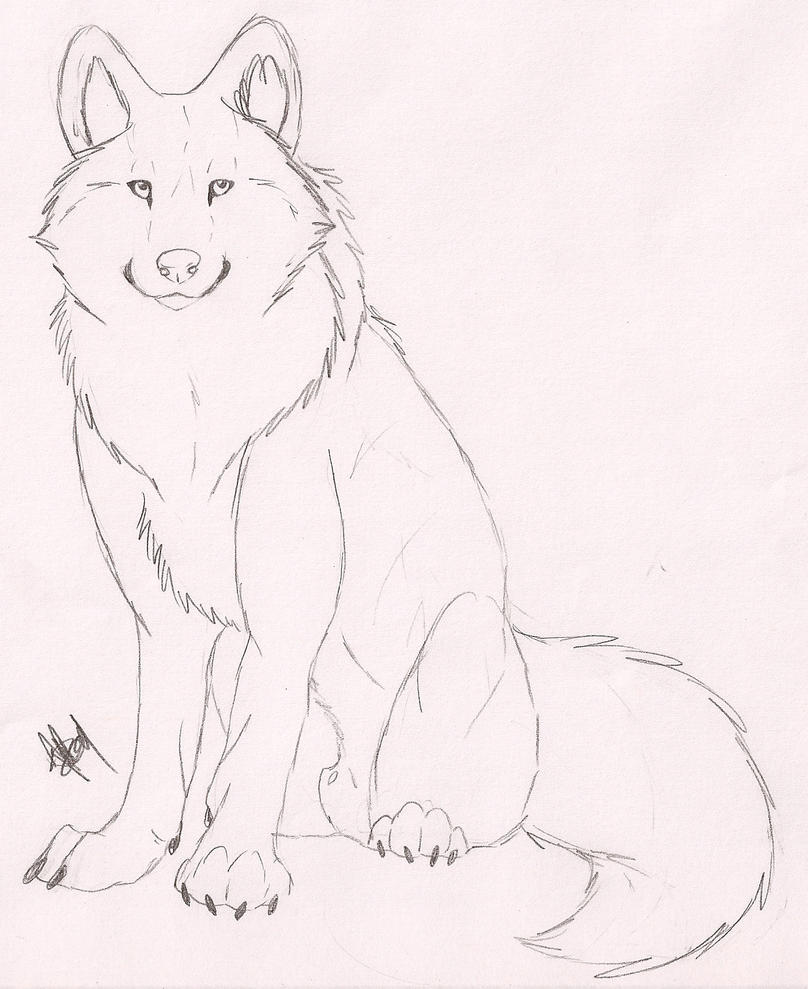Wolf Sketch By Rurouna On DeviantArt