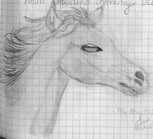 horse by Oki666