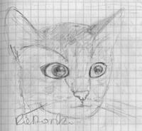 cat by Oki666