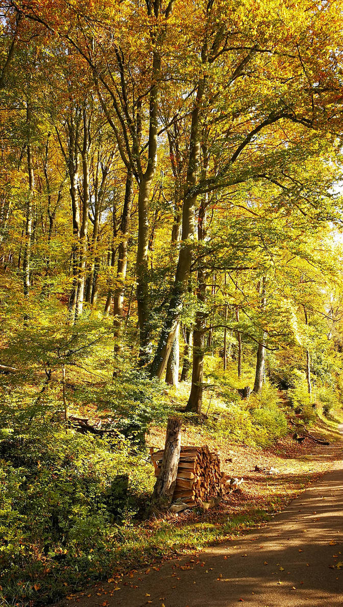 Autumn Forest at Waldshut 1