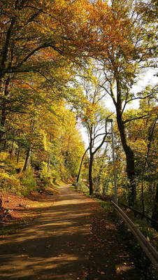 Autumn Forest at Waldshut 2