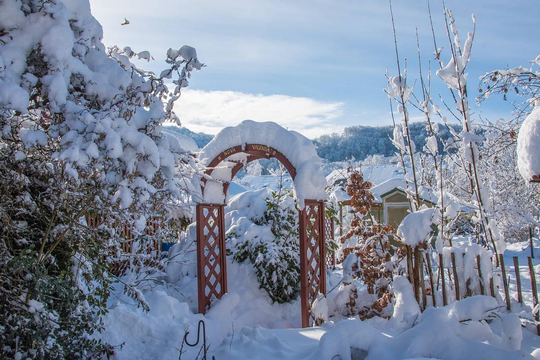 Snowy Day in my Garden