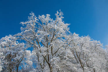 Midwinters very Blue Sky