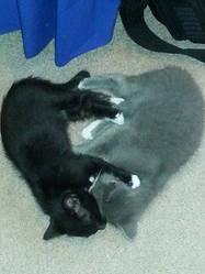 Sleepy kittens