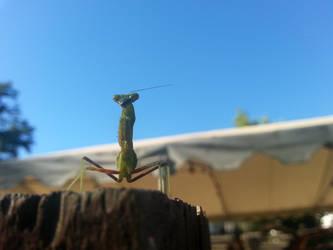 Camping - Mantis - 3