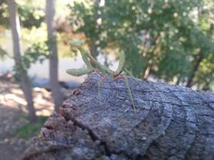 Camping - Mantis - 4