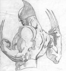 Wolverine (muscles study...) by polavoid