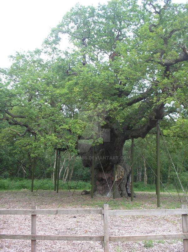 The Old Oak by Scellanis