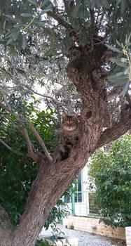 Cat? Where?