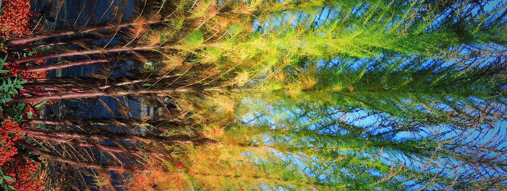 Rainbow Bright by SaraRalston