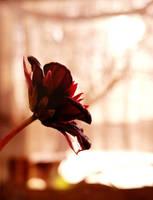 November's Romance by SaraRalston