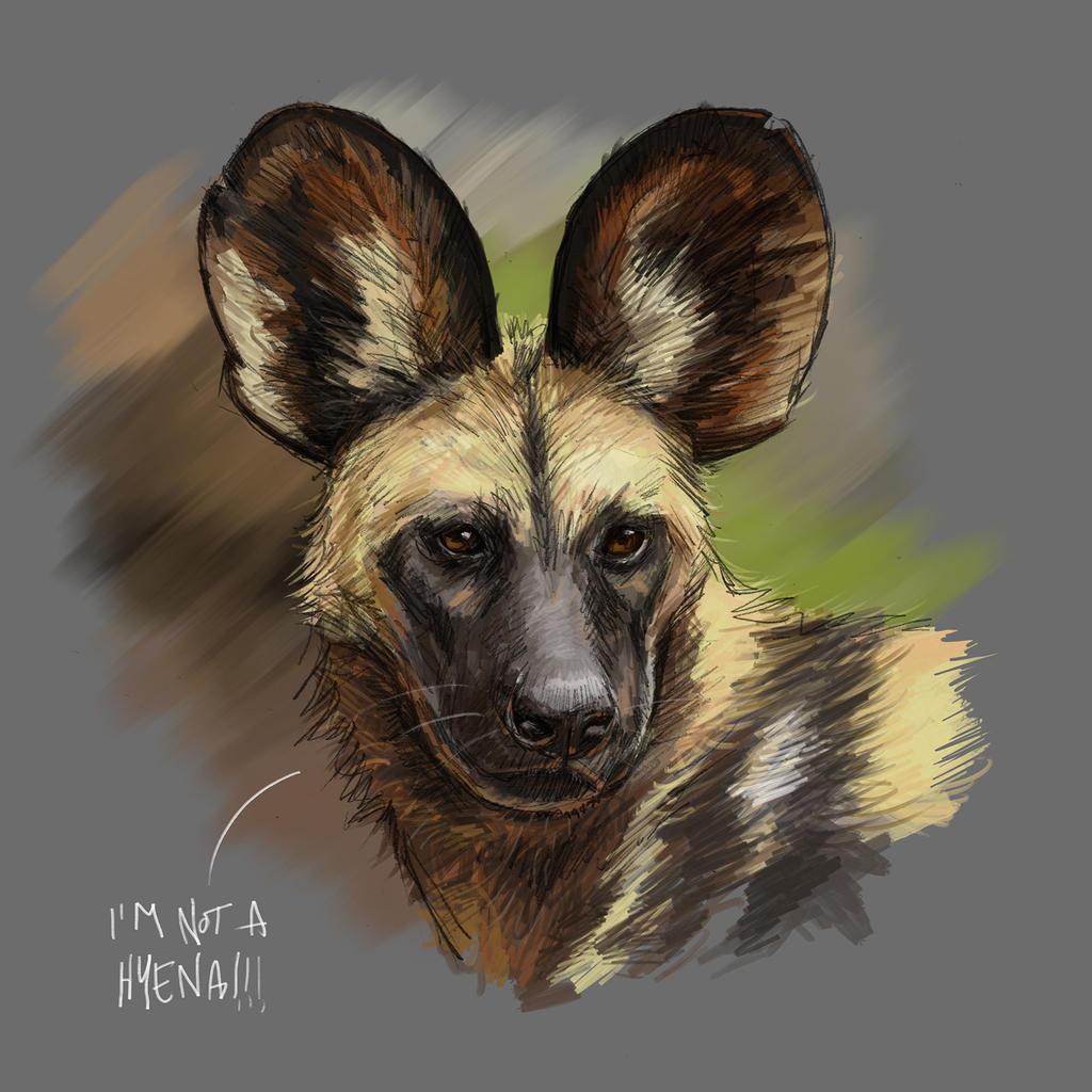 My Pet African Wild Dog