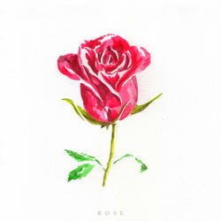 Rose by Entropician