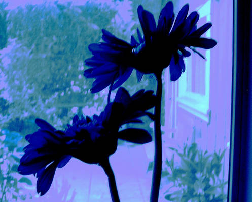 Blue Popartish Flowers