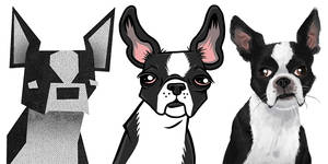 boston terriers 101 by chunkysmurf