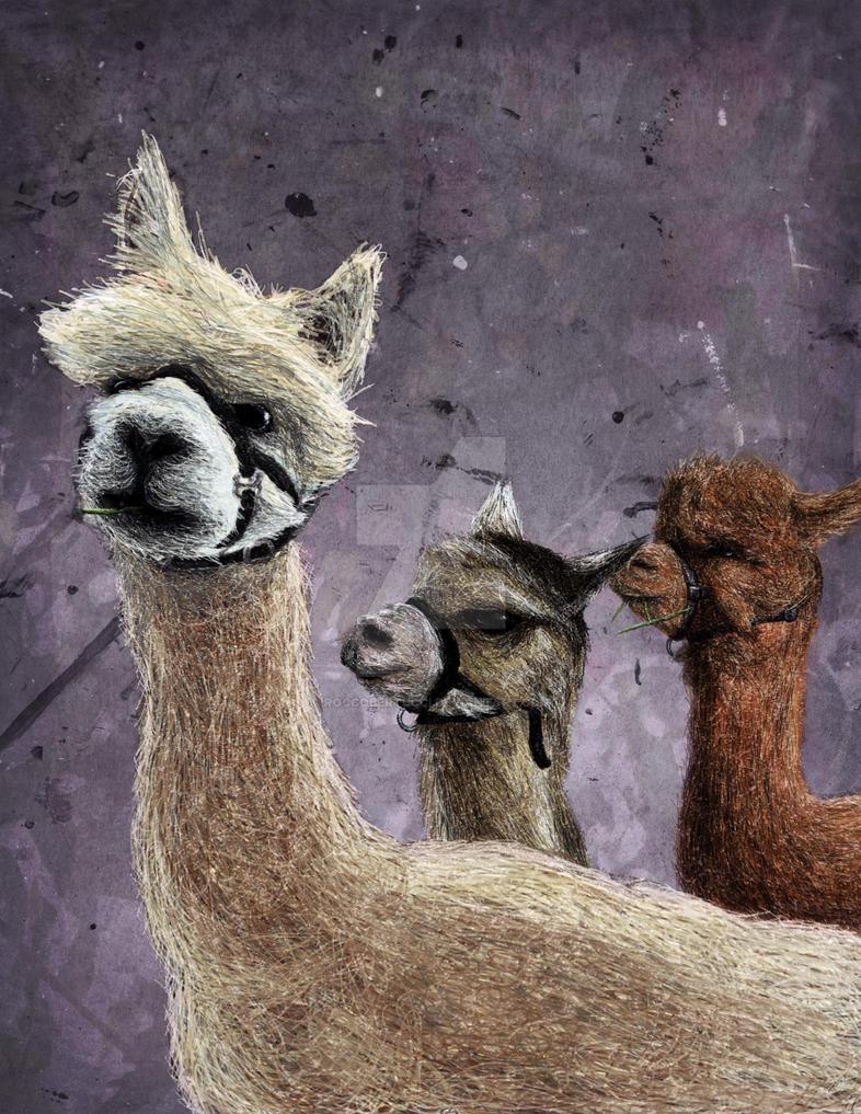 Llama Drama by RoccoBertucci