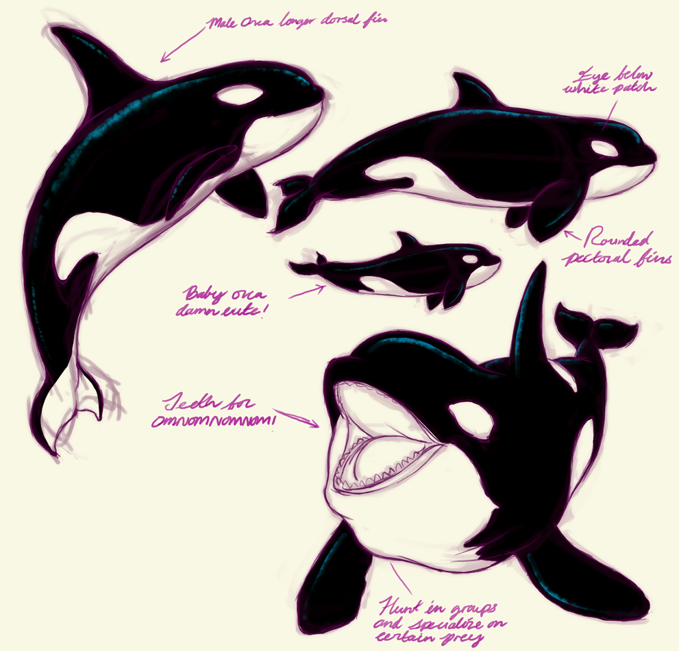 Orca Study By Dreamwatcher7 On Deviantart