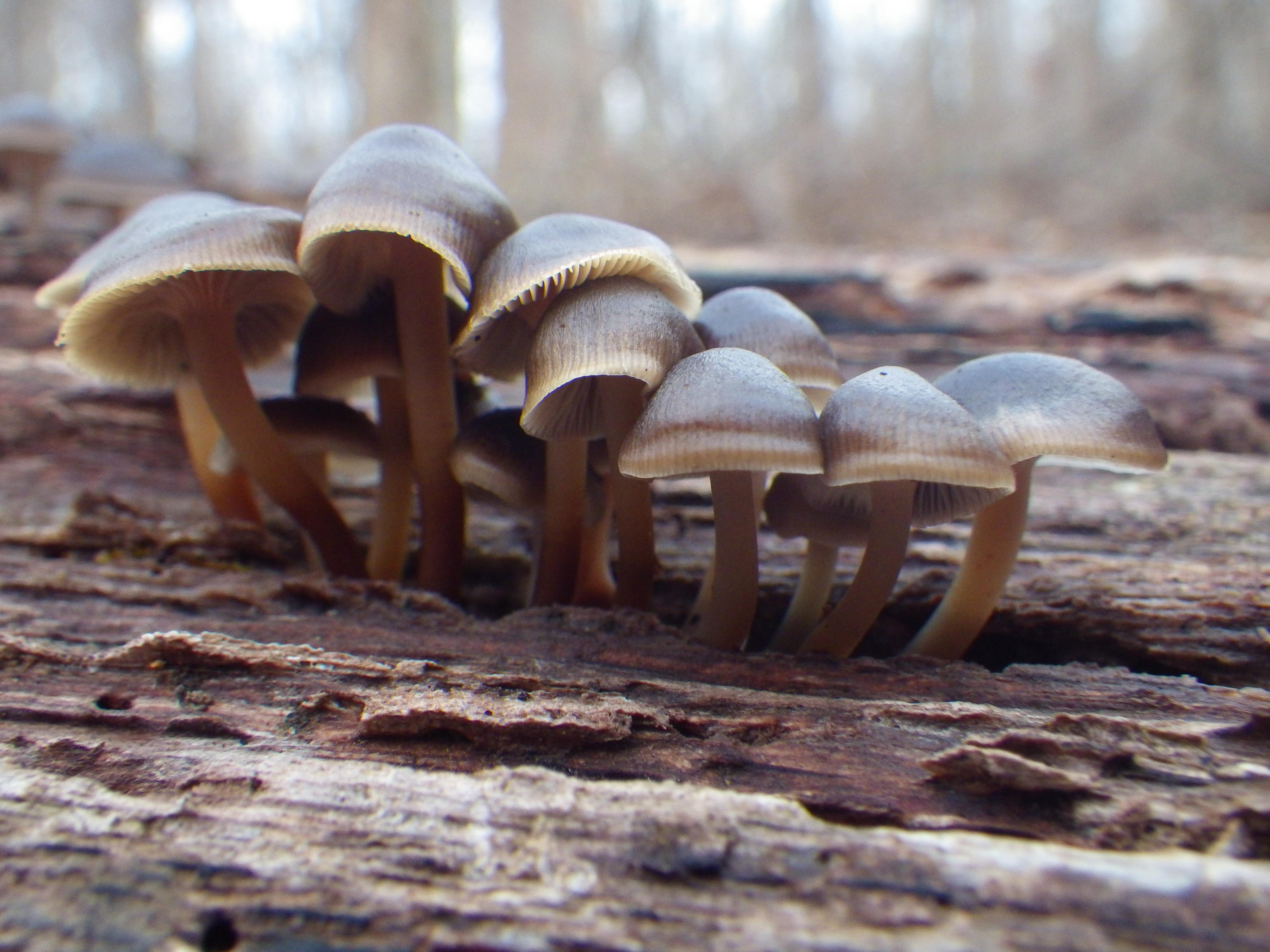 Mushroom CLuster by Llammastache