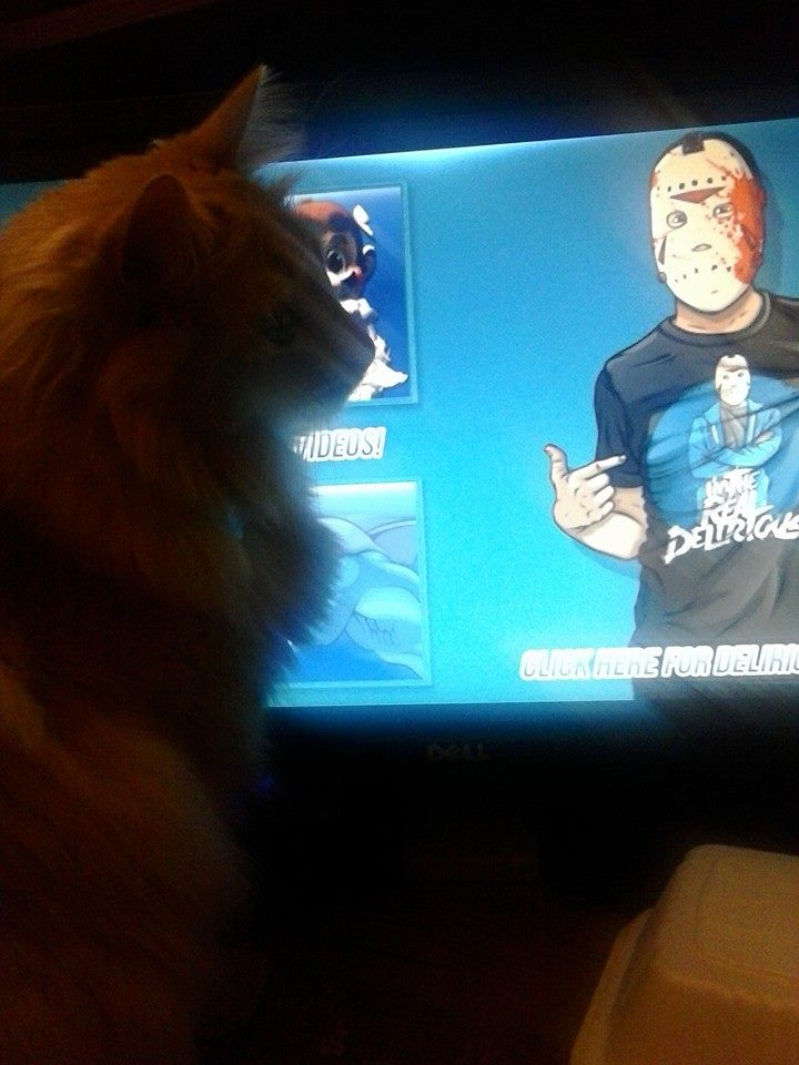 My cat and Delirious video by 200shadowfan