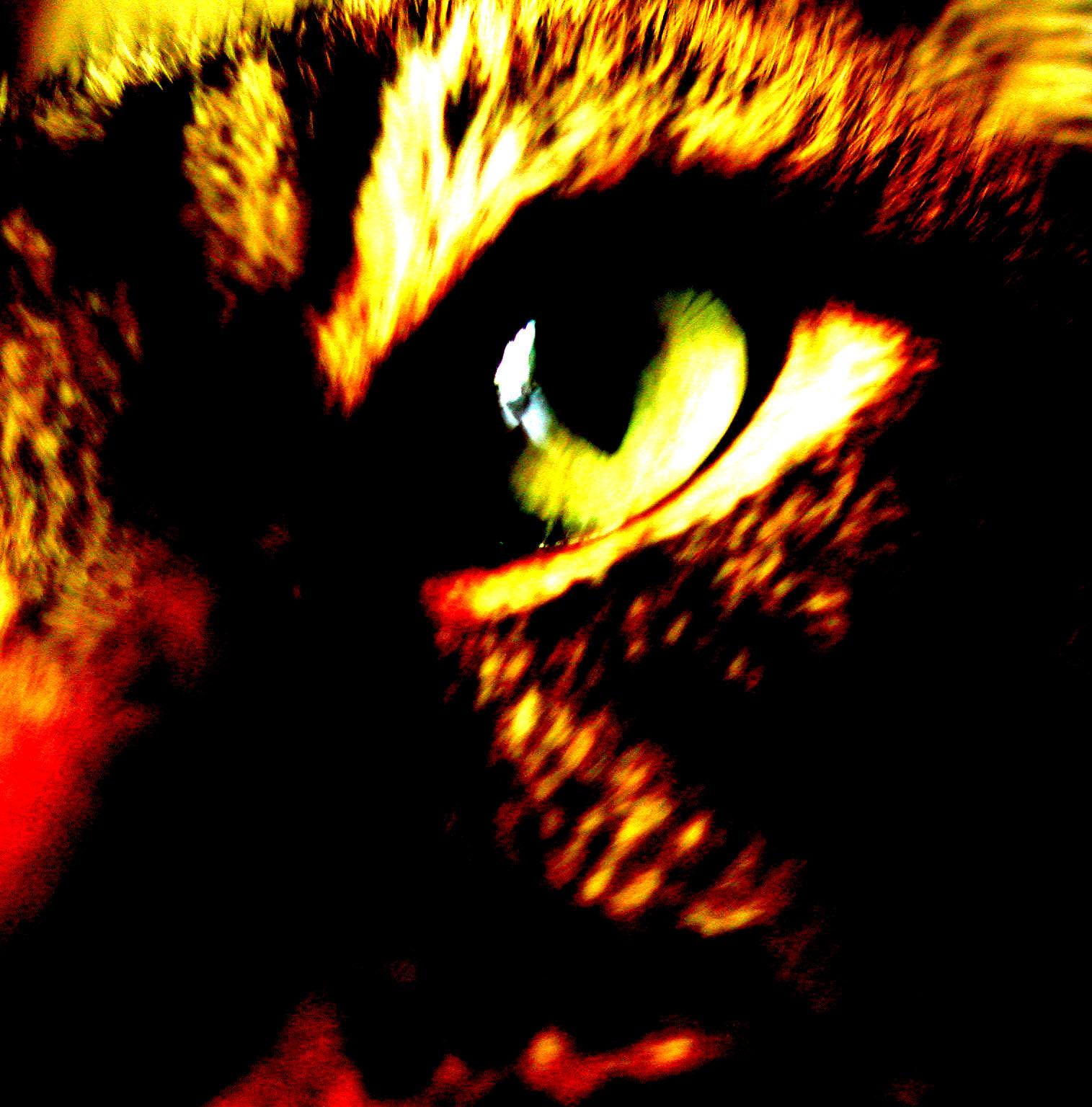 Sabrina 015 by terrygu