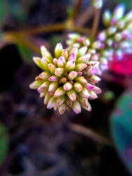 Little Flower of Silence by martuxca