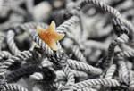 little starfish by JuliaBruch