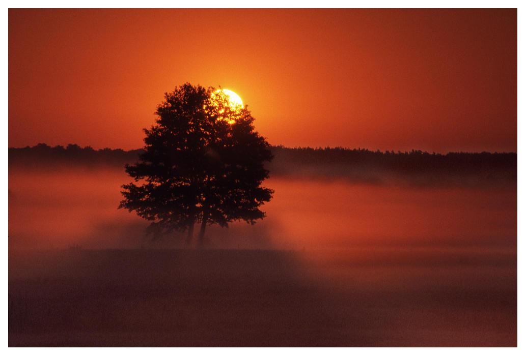 Sunrise by MartinDay