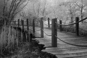 The path by RLH-Photography