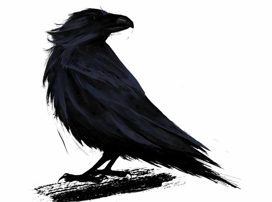 Raven by tinarams