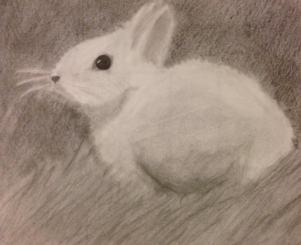 Bunny by Fma--CodeGeass