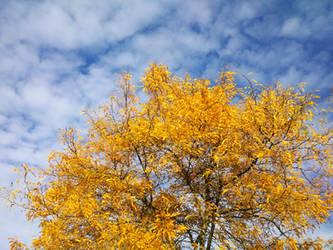 Golden Autumn by Smaragd01