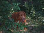 Dog 2 by Smaragd01