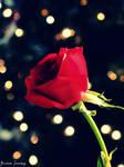 Bokeh Rose by cheekz-jess