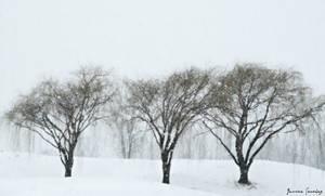 Winter Paradise by cheekz-jess