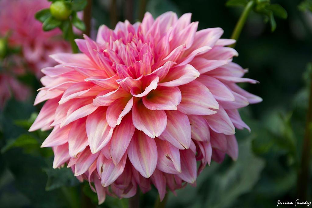 Wild Flower by cheekz-jess