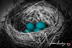 Baby Blue Eggs by cheekz-jess