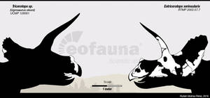 Eotriceratops vs Triceratops by EoFauna