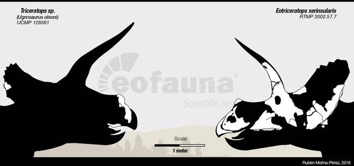 Eotriceratops vs Triceratops