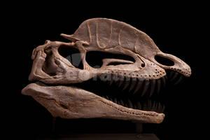 Dilophosaurus wetherilli by EoFauna
