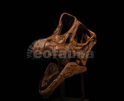 Brachiosaurus altithorax by EoFauna
