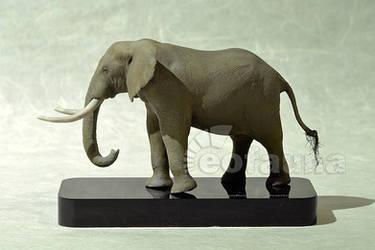 African bush elephant (Loxodonta africana) by EoFauna