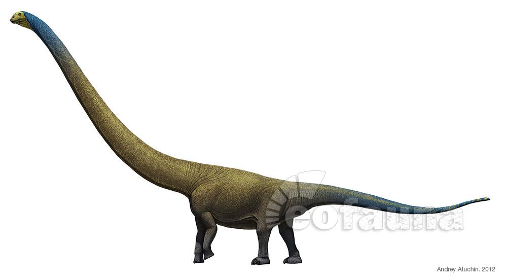 Mamenchisaurus jingyanensis by EoFauna