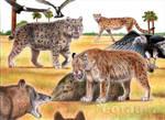 Pleistocene Florida