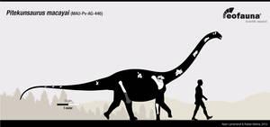 Pitekunsaurus macayai