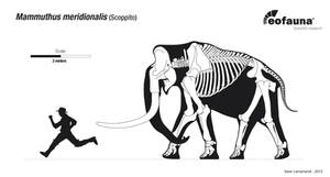 Mammuthus meridionalis skeletal by EoFauna