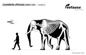 Loxodonta africana restoration by EoFauna