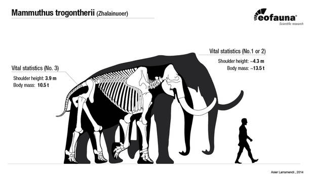 Songhua River Mammoths body size