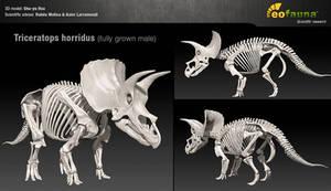 Triceratops horridus 3D skeleton by EoFauna